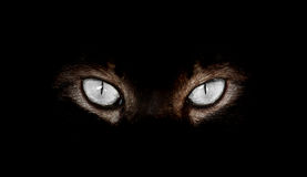 Cat Eyes ipnotica su fondo nero Fotografia Stock Libera da Diritti