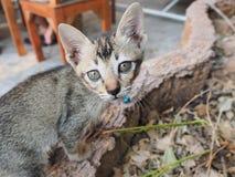 Cat Eyes. Little Cat in the Garden Stock Image