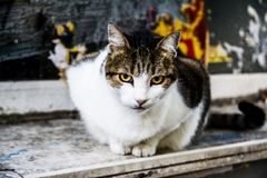 Cat eyes. A scholar cat at theirs famous place at Istanbul, Kadikoy Royalty Free Stock Photo