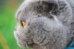 Cat eyes shot on manual optics. Selective focus. Nature stock images