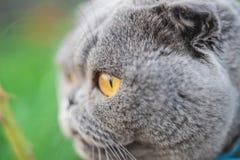 Cat eyes shot on manual optics. Selective focus. Nature stock photos