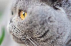 Cat eyes shot on manual optics. Selective focus. Nature royalty free stock image