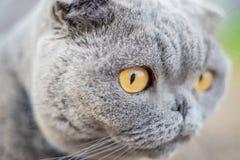 Cat eyes shot on manual optics. Selective focus. Nature stock image