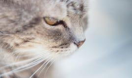 Cat eyes shot on manual optics. Selective focus. Nature stock photo
