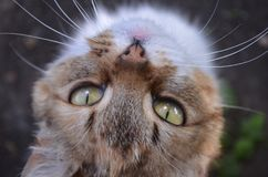 Cat, Eyes, Snout, Housecat, Pet Royalty Free Stock Images