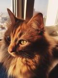 Cat eyes. Sun light on the window Royalty Free Stock Photography