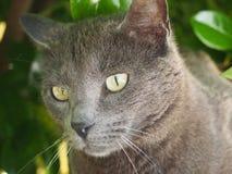 Cat eyes. Cat under a bush Royalty Free Stock Photography
