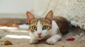 Cat with eyes wide open Stock Image