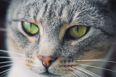 Cat face. Close-up of cute cat face Royalty Free Stock Photos