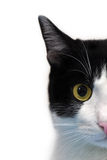 Cat face. Half face of black and white cat over white background Stock Photo