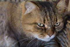 Cat face. With wide open eyes Stock Photos