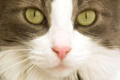 Cat face. A close up shot of a cats face and eyes Royalty Free Stock Images
