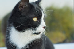 Cat Face Fotografia de Stock