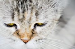 Cat Face Image stock