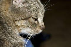Cat Face Photos stock
