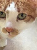 Cat Face Imagen de archivo