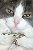 Cat face. A cat looking at you with a funny face Stock Photos