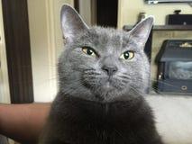 Cat Face Photographie stock libre de droits