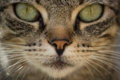 Cat Face Photo stock