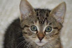Cat Face Imagen de archivo libre de regalías