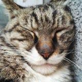 Cat Face Royalty-vrije Stock Foto's