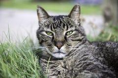 Cat Face Fotos de archivo libres de regalías