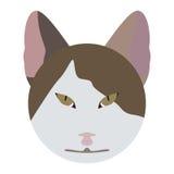 Cat Face Fotografia Stock