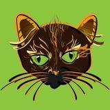 Cat Face Fotos de archivo