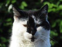 Cat Face immagine stock libera da diritti