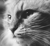 Cat face art black and white Stock Photography