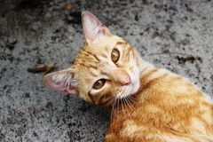 A cat face in the backyard. A happy cat face in the backyard Royalty Free Stock Photography