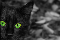 Cat  with face beautiful eyes close up portrait. Close-up portrait of a black cat Stock Photos