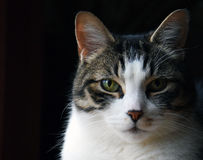 Cat Face. Bold, high contrasted profile of a cat Stock Photos