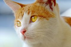 Cat face at close range Royalty Free Stock Image