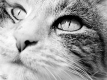 Cat Face - Close-Up. A contented cat meditates stock images