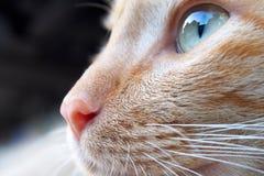 A cat face Stock Photos