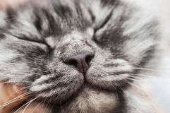 Cat face close up Stock Images