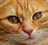 Cat, Face, Close, View, Eyes Stock Photos