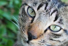 Cat Face Closeup Foto de archivo libre de regalías