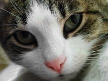Cat face closeup stock photos