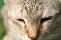 Cat Face Closeup Fotografía de archivo libre de regalías