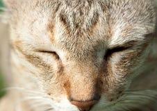 Cat face closeup Stock Photography