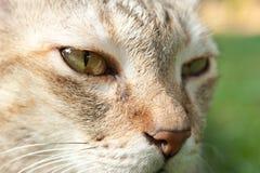 Cat face closeup Royalty Free Stock Photos