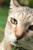 Cat face closeup Stock Images