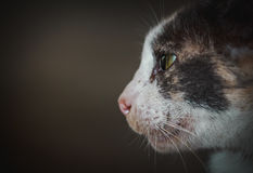 Cat face. Fauna background Royalty Free Stock Image