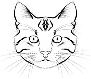 Cat face grafik isolated Stock Photography