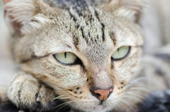 Cat face looking for something. Cute animal and pet Stock Photo