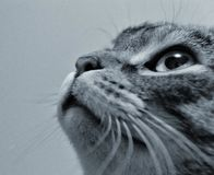 Cat Face Stock Photography