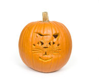 Cat face on pumpkin Royalty Free Stock Photography