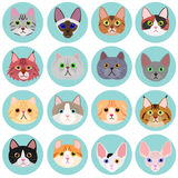 Cat face set with circle Stock Photos